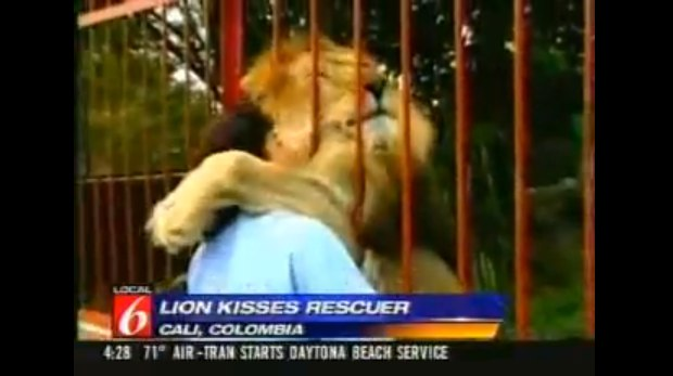 Woman Lion Injured Forest Columbia - YouTube-1